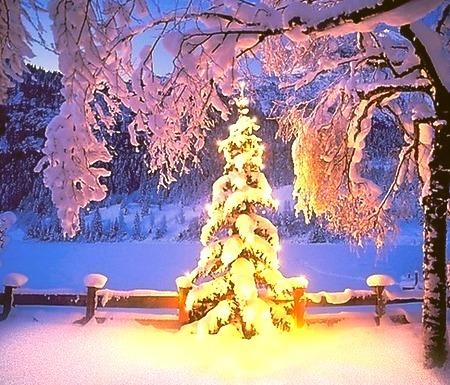Christmas, The Cascades, Oregon