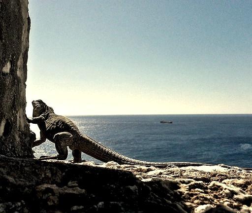 Iguana enjoying the view from a castle built near Santiago de Cuba