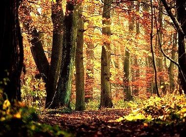 Primeval Forest,  Skipton Woods, England