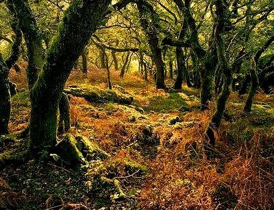 Enchanted Forest, Dartmoor, Devon, England