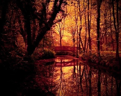 Forest Bridge, Hesse, Germany