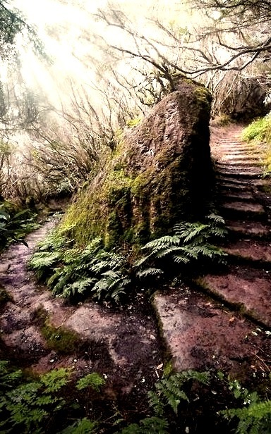 Forest Path, Madeira, Portugal