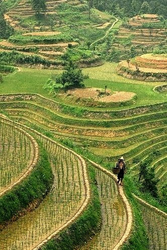 Longshen Rice Terraces in Guilin, China