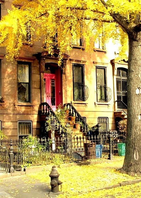 Autumn, Brooklyn, New York